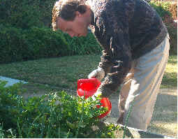 Male client in Training House garden, watering plants with a red watering can.